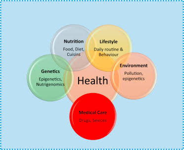 Health And Lifestyle Correlation