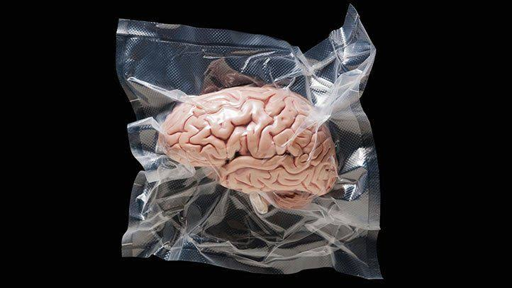 human brain has shrunk up to the size of a tennis ball.