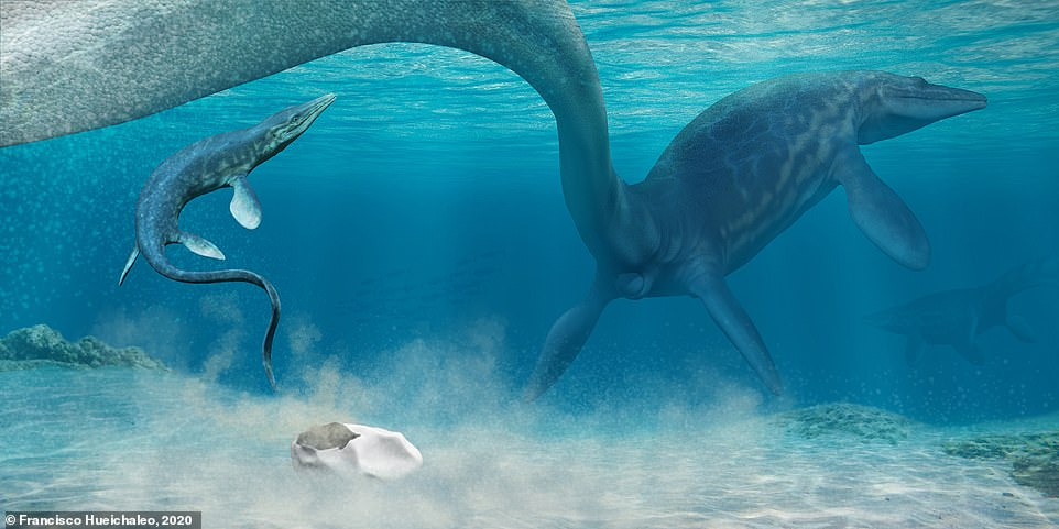 Fossil egg is linked with a prehistoric giant marine reptile.